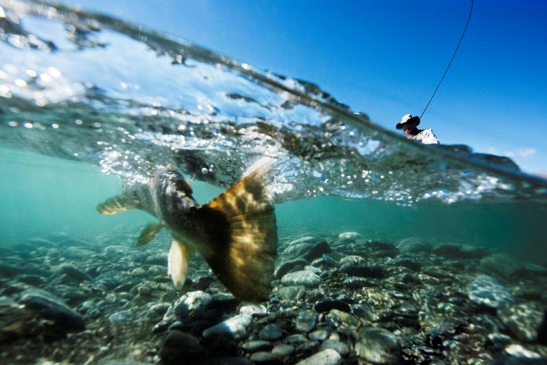 underwater shot w netting fish comp